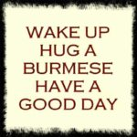 wake up hug a burmese have a good day
